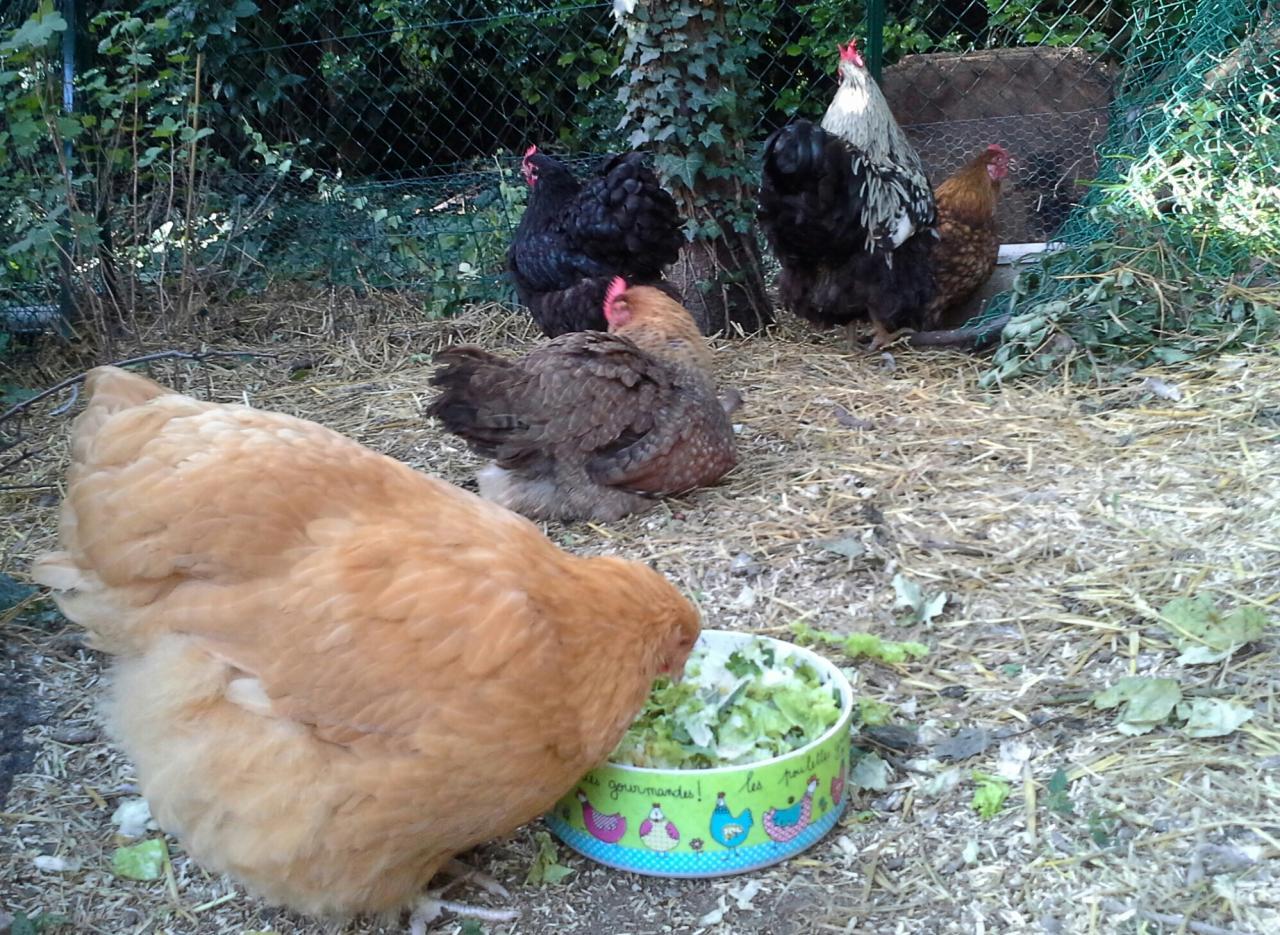 Mimi jolie attaque la salade après les adultes