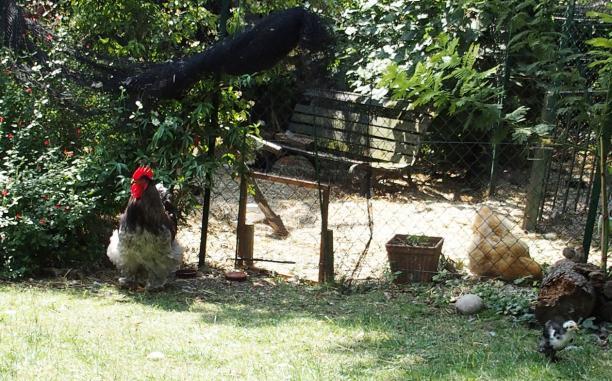 03072015 patty coq cochin vigilant
