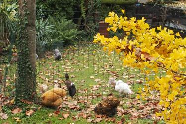 06112010 jardin en automne