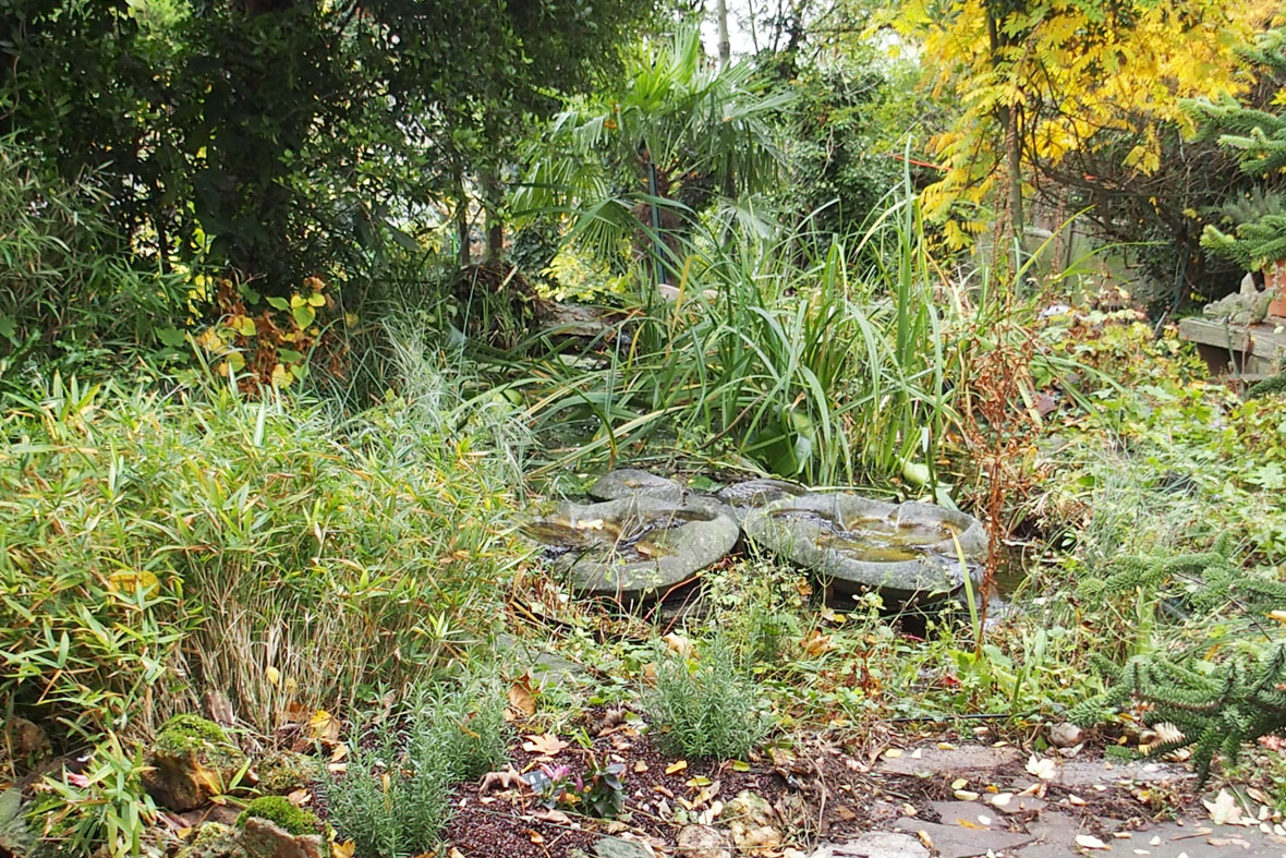 Beautiful bassin de jardin nettoyage gallery design for Entretien jardin automne