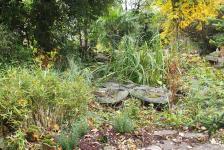06112015 jardin en automne le bassin