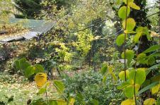 06112015 jardin en automne le poulailler