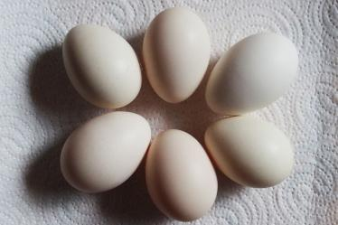 13032015 oeufs de poules huppees