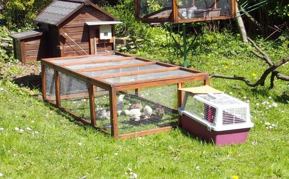 14042015 a installation des poussins orpi au jardin