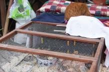 14042016 chatte au chaud sur le parcours des poussins