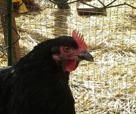 Zoe, empêchée de retourner à son nid