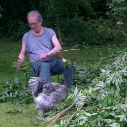 Patty, le coq Cochin bleu, vient explorer les branchages