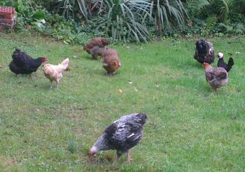 Groupe dans le jardin 1