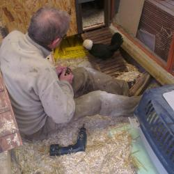 Koala inspecte les travaux de Denis
