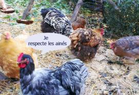 Je respecte les aines