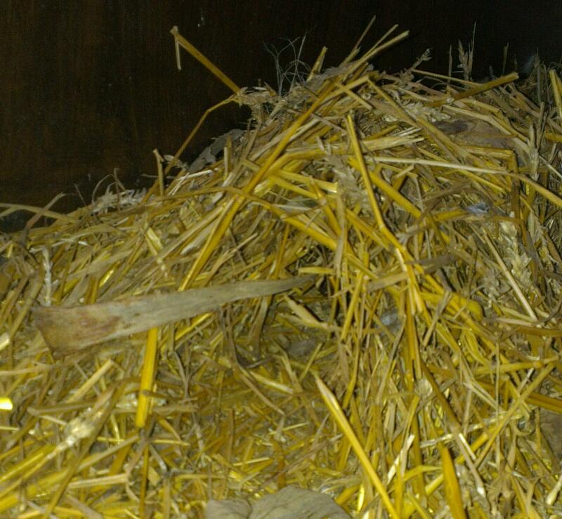 Un h risson dans l 39 enclos des poulets for Dans keff