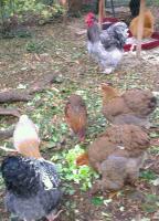 Patty regarde les jeunes manger