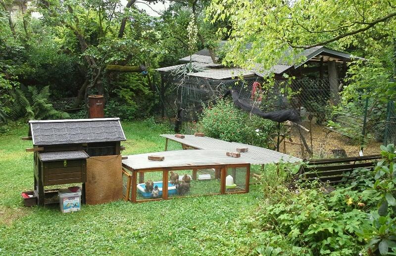 un ou plusieurs enclos pour les poules et les coqs. Black Bedroom Furniture Sets. Home Design Ideas